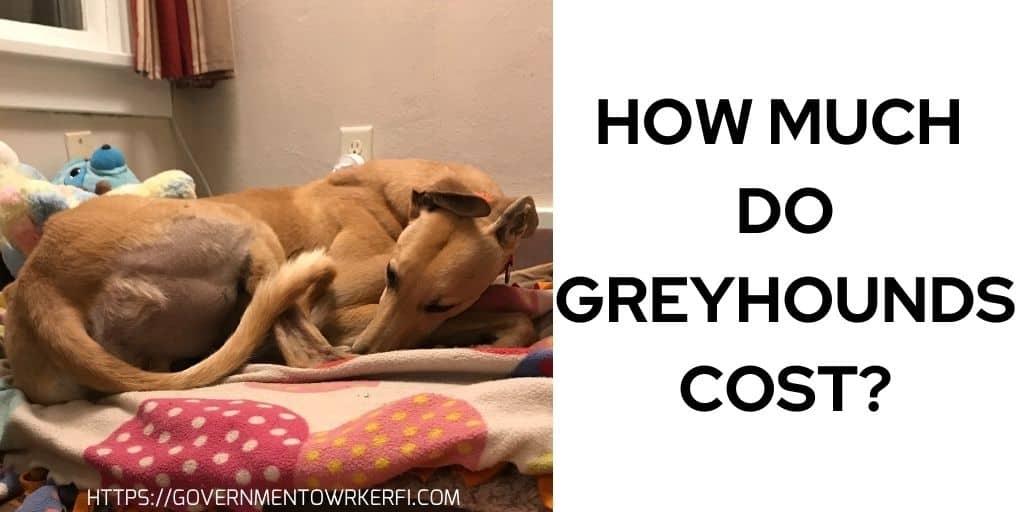 How Much Do Greyhounds Cost- Practical Budget For Your Dog